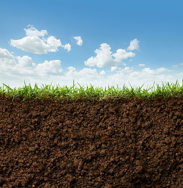 Signs Your Yard Needs to be Aerated